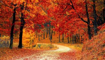 Las 6 tendencias de este otoño que ya se ven por la calle (y por las tiendas)